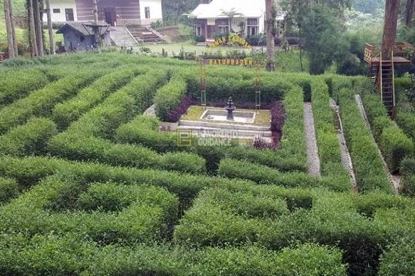 Harga Tiket Masuk dan Jam Operasional Kebun Raya Baturaden